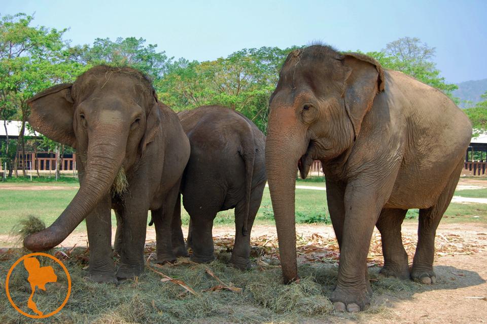 Elephant Nature Park - Descubre Tailandia